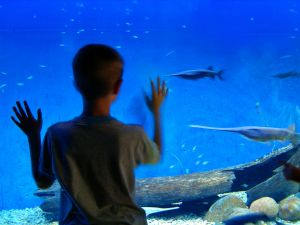 Birmingham New Street Get closer than ever before at The National SEA LIFE Centre! Located in the centre of Birmingham, prepare to experience the ultimate underwater discovery.