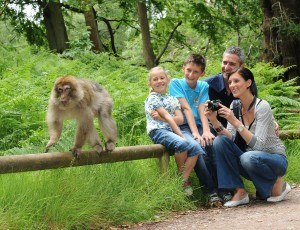 Up close & personal at Trentham Monkey Forest
