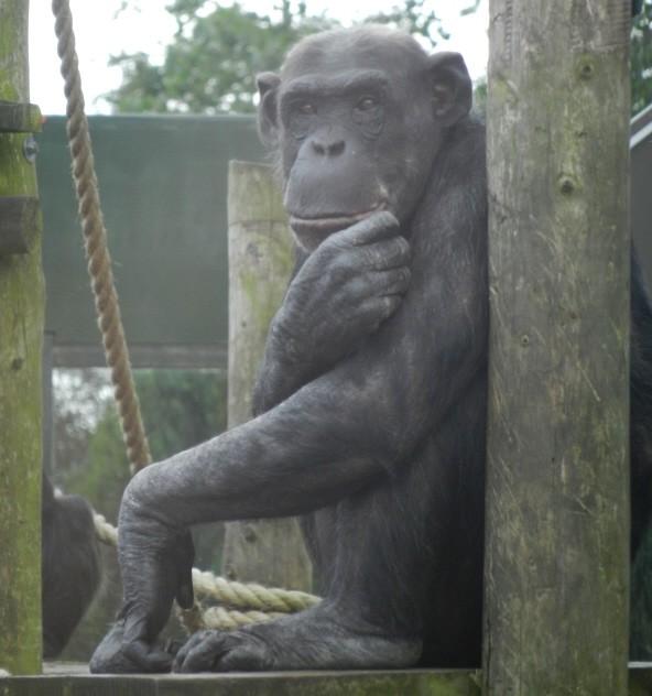 Twycross_Zoo