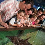 2 Free Tickets to Sea Life Centres for Teachers