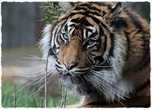 Chessington_zoo