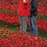 Poppy Installation At The Tower Of London