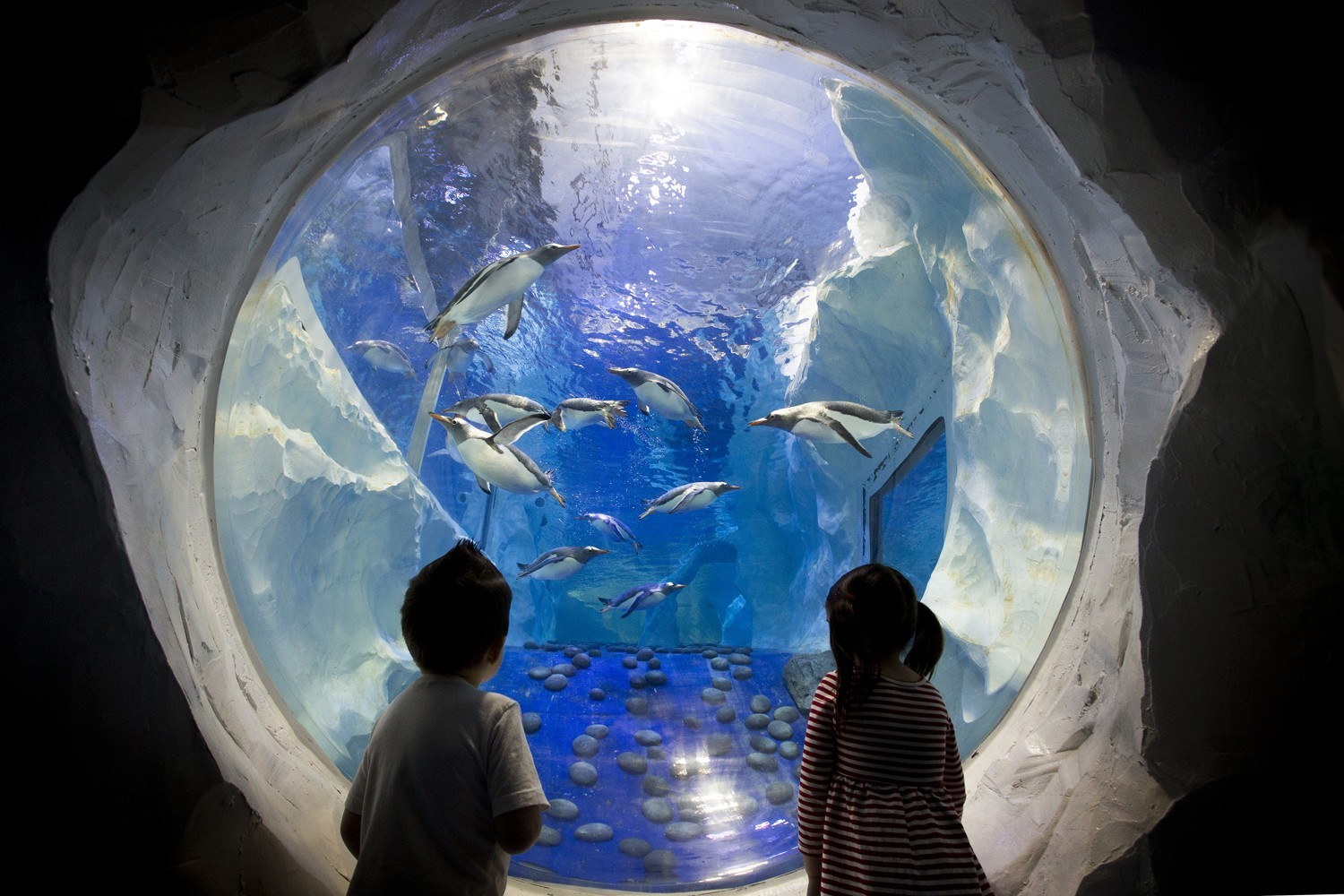 Don't miss out on one of the best places to visit in Sydney. Cheapest tickets and Sydney attractions passes when you buy tickets online through SEA LIFE Sydney Aquarium. What are you waiting for? Come and see a top attraction in Sydney!