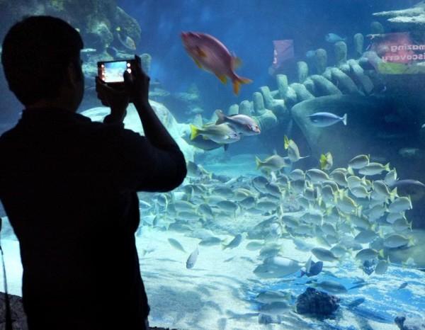 sea life centre photography