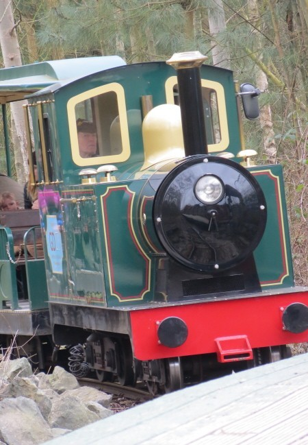 Conkers Train in the New Forest