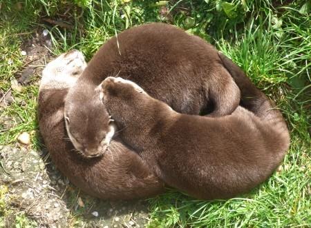 Twycross Zoo beavers