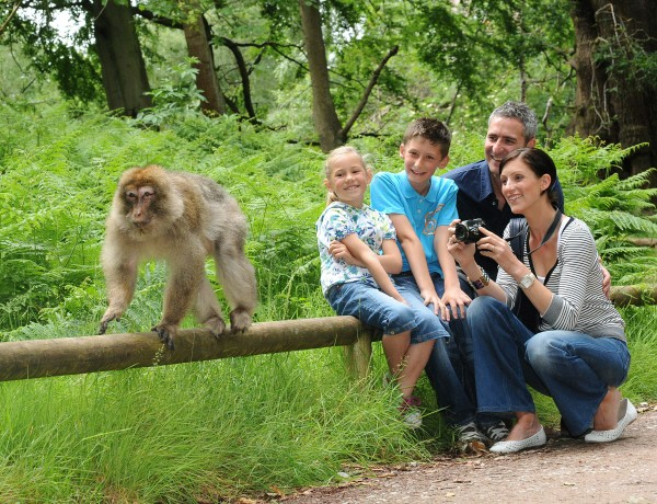Trentham Monkey Forest monkeys and people nearby