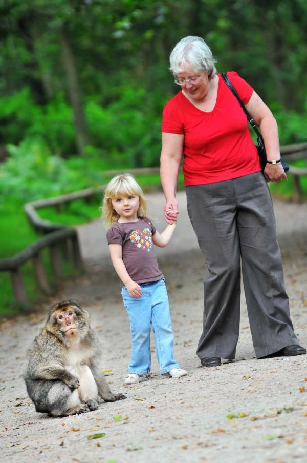 Trentham monkey forest lady, child & monkey