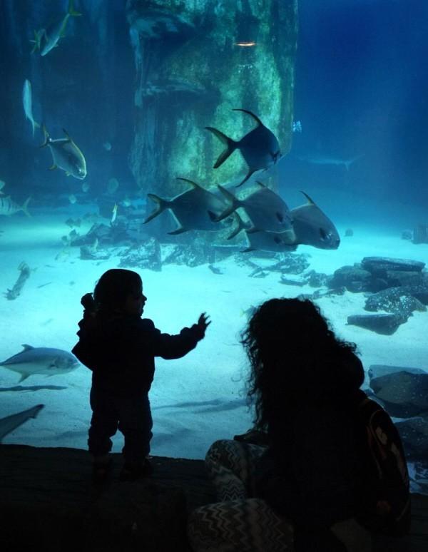 young child looking at the fish at sea life aquarium