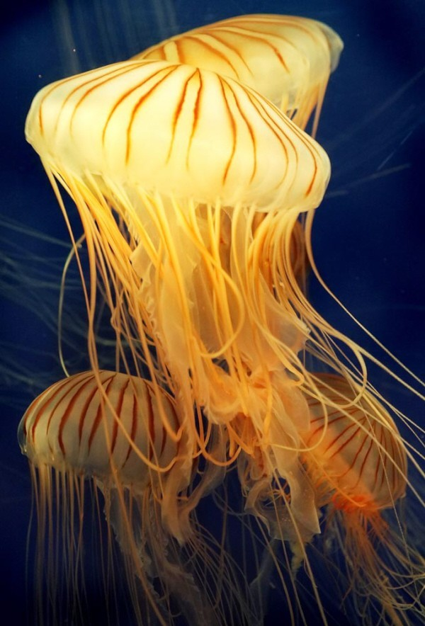 sea life aquarium jelly fish