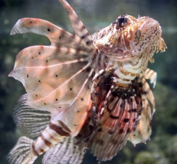 sea life centre fish exhibits