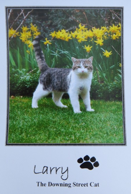larry the cat autograph 10 downing street