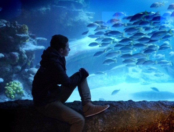 Inside the London Sea Life Aquarium