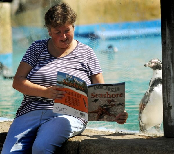 meet the penguins at Chessington World of Adventures
