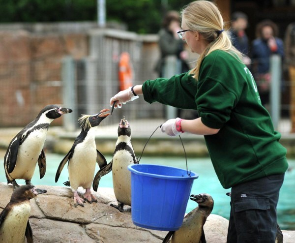 feeding time at London Zoo