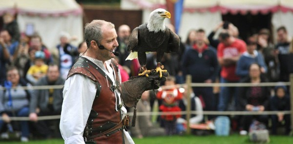birds of prey attraction at Warwick Castle
