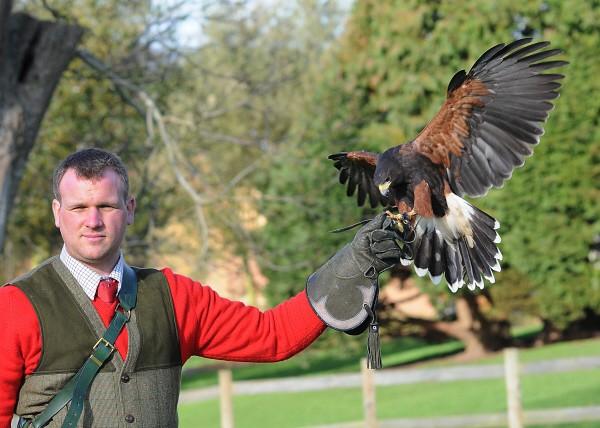 Leeds Castle falconry display