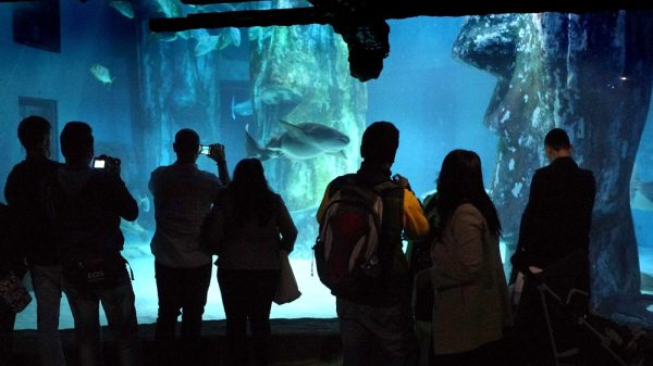 sea life centre inside shot